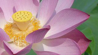 flower-694641_640