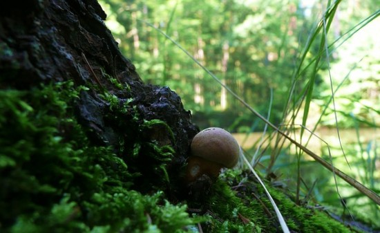 mushroom-21077_640
