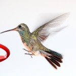 hummingbird-1041323_1280